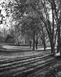 [trees photo]